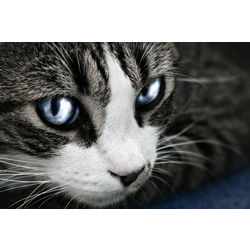 Warrior Cat Name Generator Quiz Quotev | Best Cat Cute