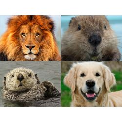 Lion beaver otter personality test