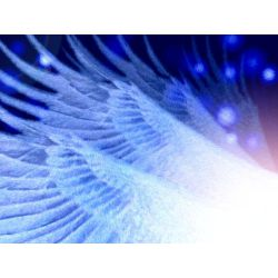 Your Angel Wings - Quiz