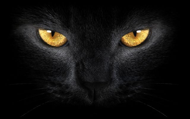 The Cats Of Ulthar By H P Lovecraft Stories By H P Lovecraft