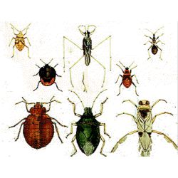 What's your spirit insect? - Quiz