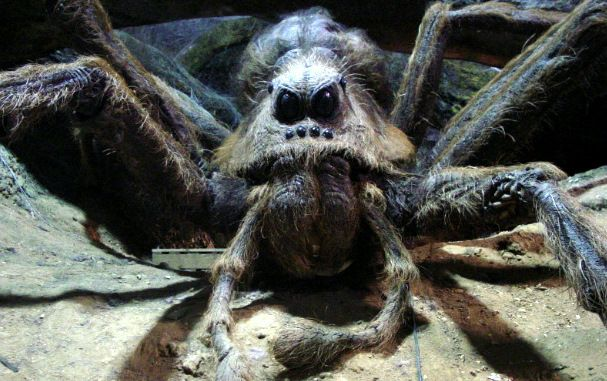 Aragog (Year 2) | Magic? ~Harry Potter Fanfiction