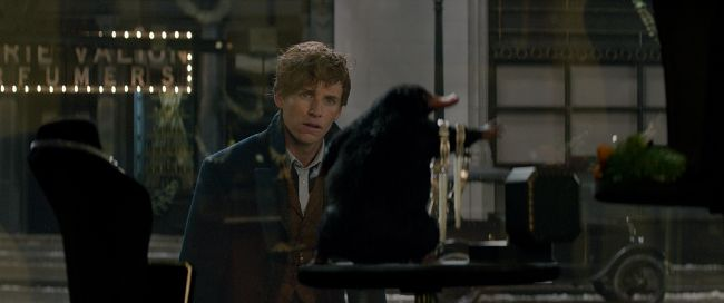 Chapter 5: Catching the Niffler and a Mating Dance | Fantastic Beasts and  Where to Find Them (Newt Scamander x reader)
