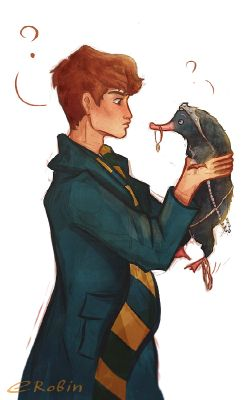 Newt Scamander x reader | Great book of one shots