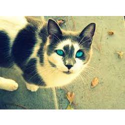 Warrior Cat Ocs