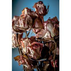Dead Roses (Yandere!Creepypasta x reader)