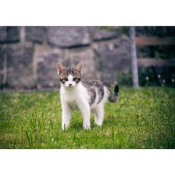 Battle Cat Quizzes