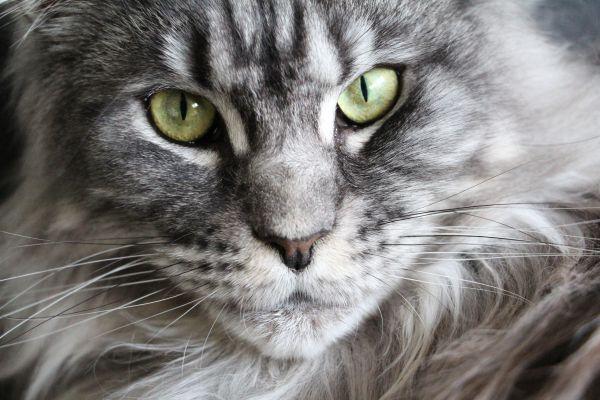 My Animal Soulmate?