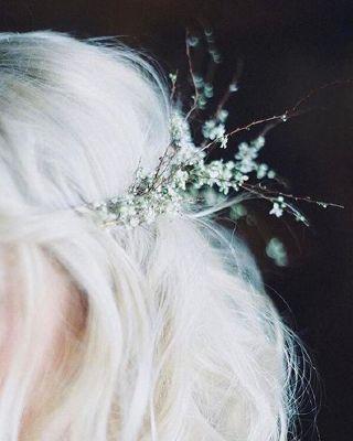 The Pureblood Princess | Sirius Black