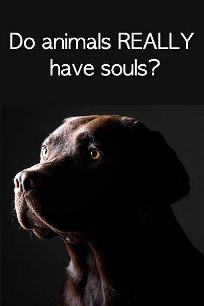 Do animals REALLY have souls?